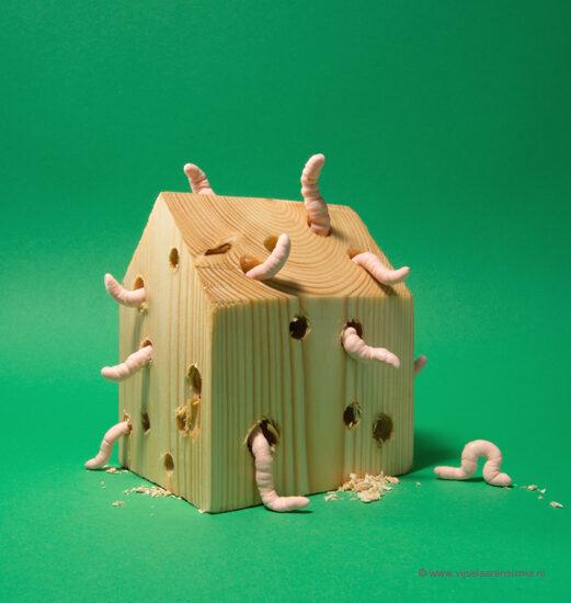vijselaarensixma Wood Worm 2016